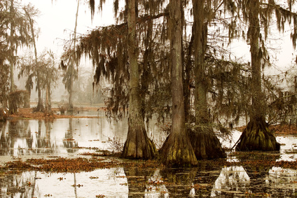 misty morning in the swamp